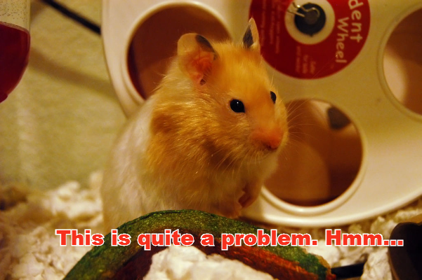 The hamster is now contemplating on this issue.