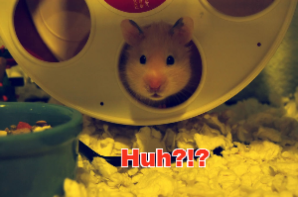A very surprised hamster