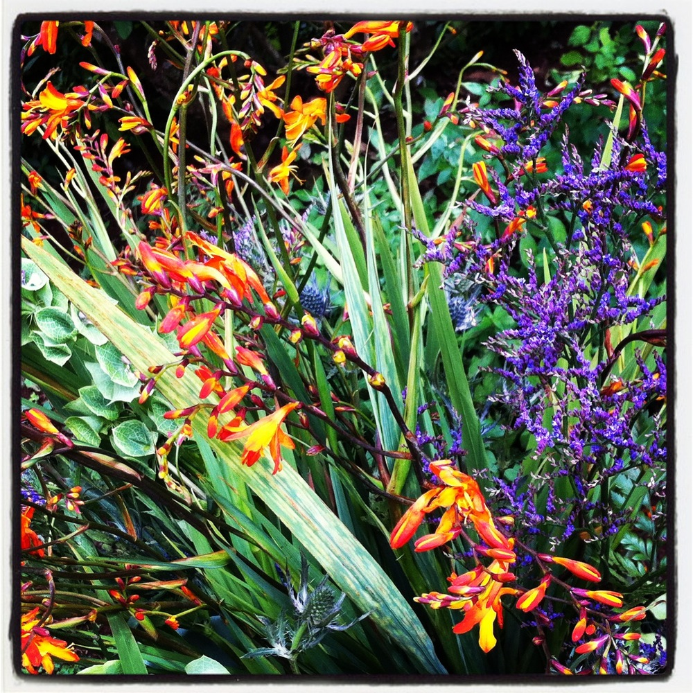 Orange and Purple Flowers - lunchwithjuju.com