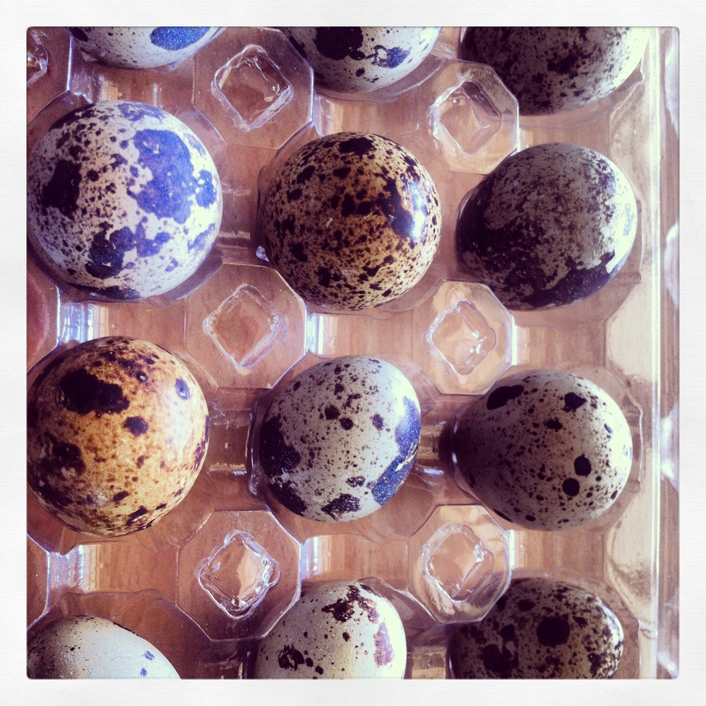 Pink Easter Quails Eggs LunchWithJuju 1.jpg