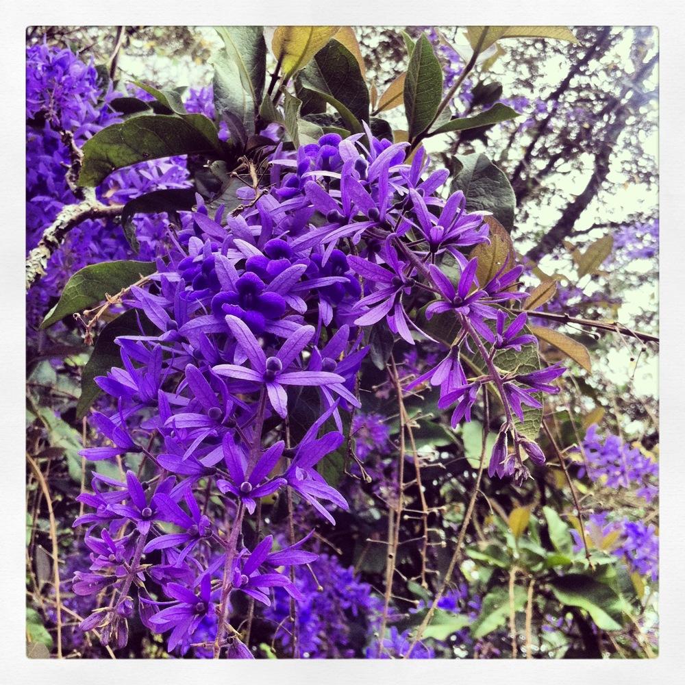 The Garden - Purple flowers?.jpg