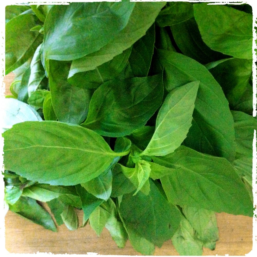 Pesto LunchWithJuju 1.jpg