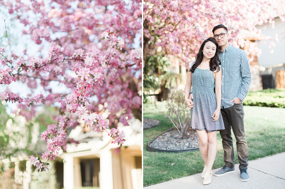 Calgary-wedding Photography-spring-engagement-cherry-tree-couple.jpg