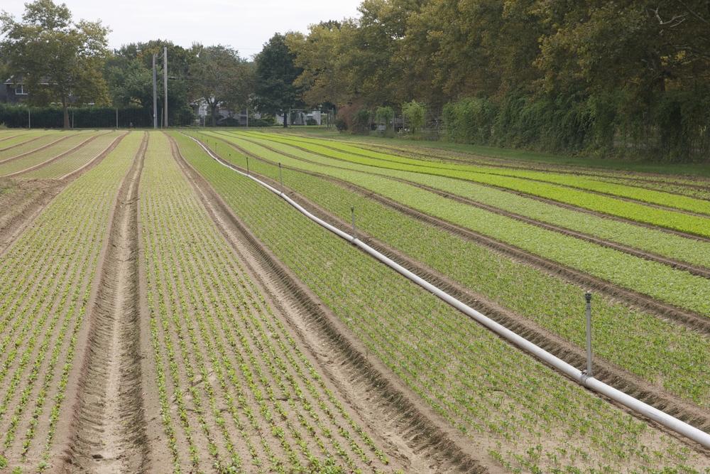 Fall Crops
