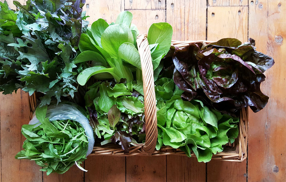 Clockwise from top: Bok Choi, Red Boston Lettuce, Green Boston Lettuce, Spring Salad Mix, Baby Arugula & Red Kale. Not pictured: Bonus Item.