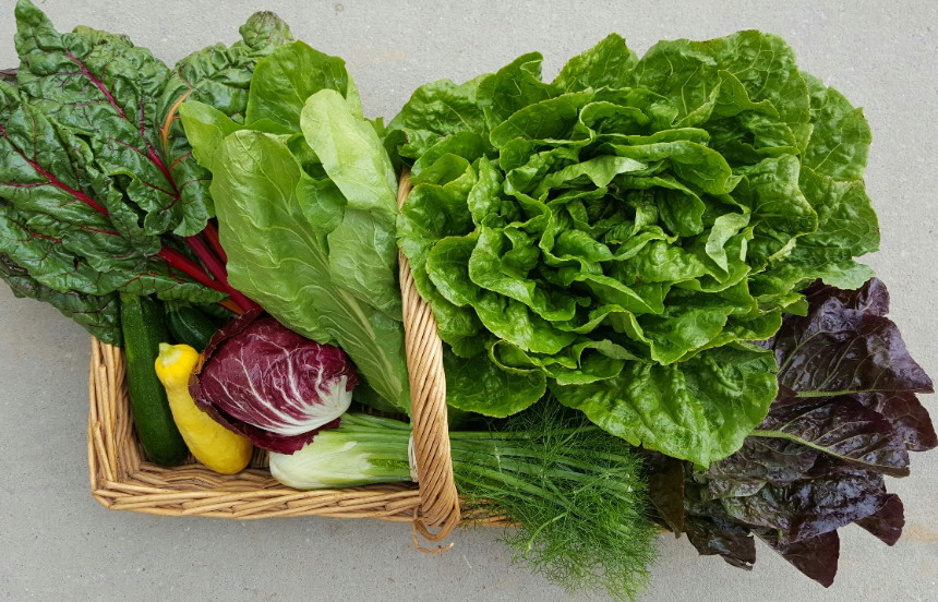 Clockwise from top right: Green Romaine Lettuce, Red Romaine Lettuce, Fennel, Radicchio, Zucchini OR Summer Squash, Swiss Chard, Sugarloaf Chicory