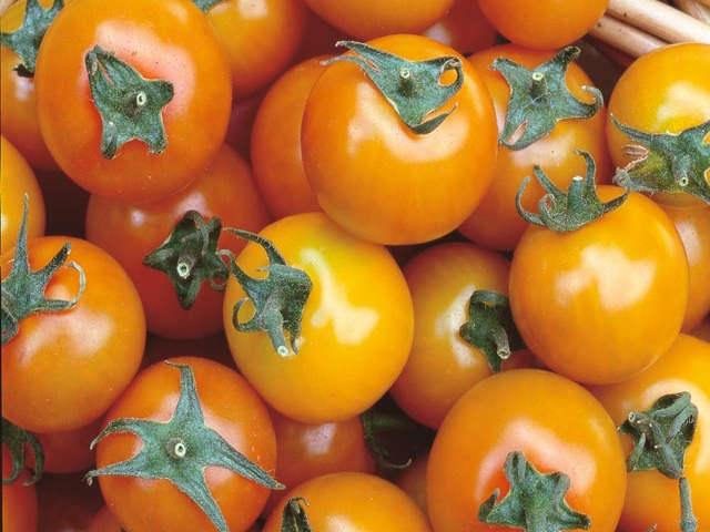 tomato-sungold-2.jpg