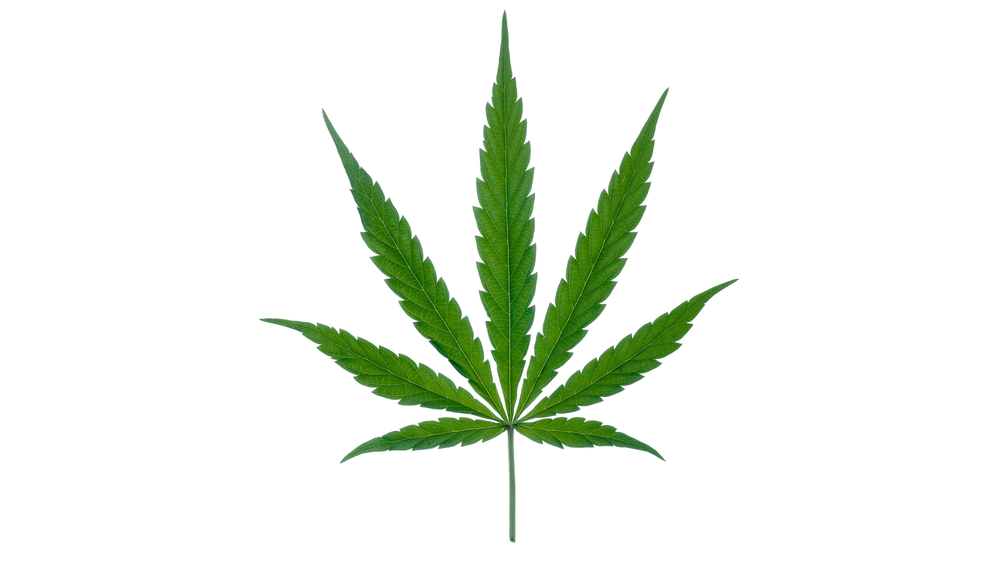 1503425983cannabis-leaf-png-marijuana2.png