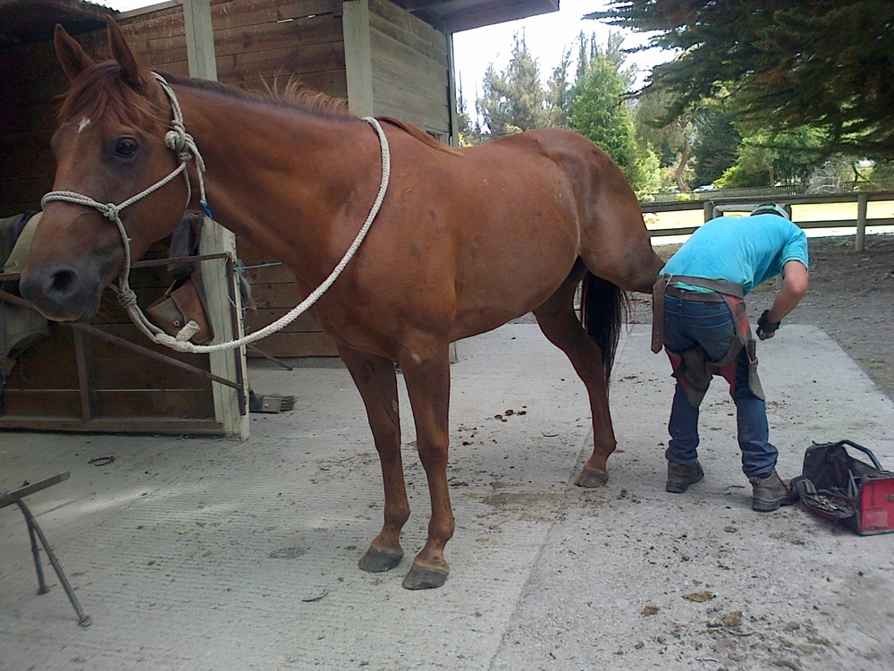 This horse was presented as very difficult to shoe. 45 minutes later, problem solved. Super-impressed farrier.