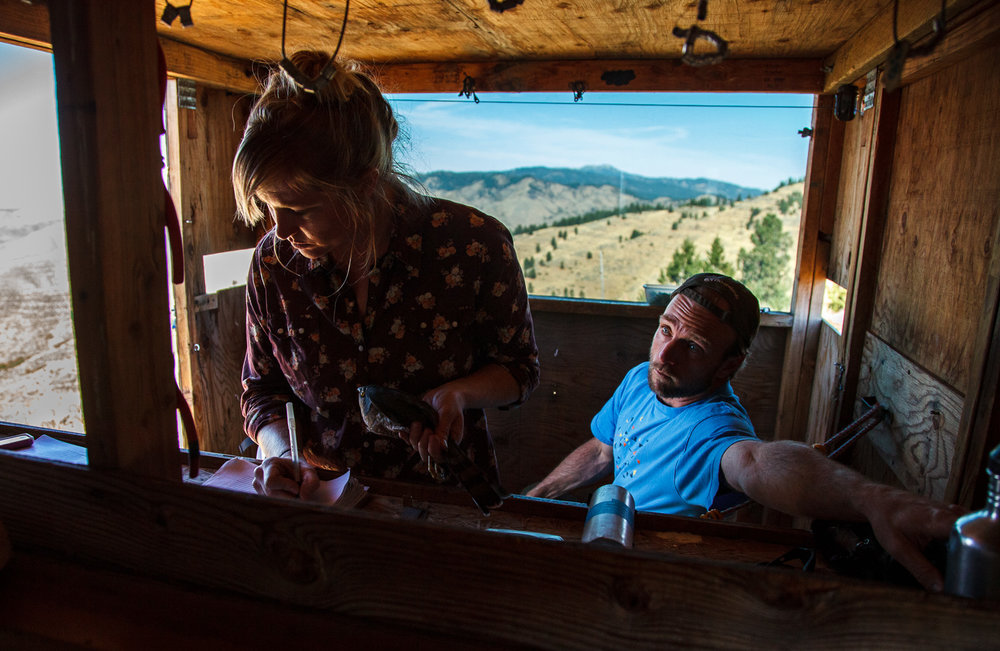 From inside a blind at Lucky Peak, Robin Leonard gathers important data about a Sharp-shinned Hawk captured moments before, as IBO's Research Director Jay Carlisle looks on.