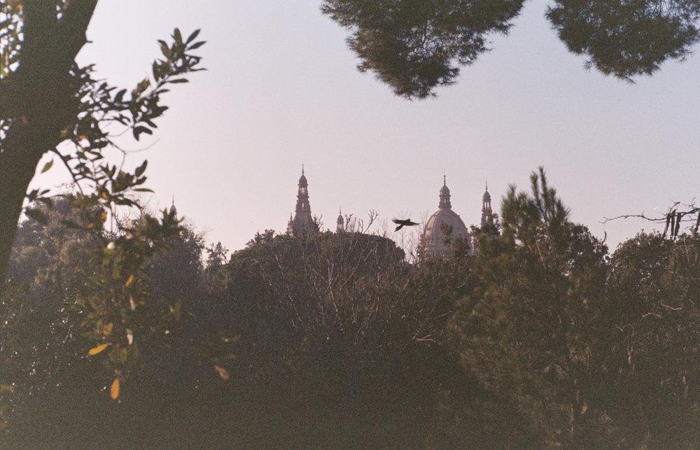 davislam.com_2015-12_barcelona-22.jpg