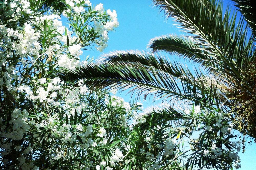 davislam.com_2012-06_creta-12.jpg