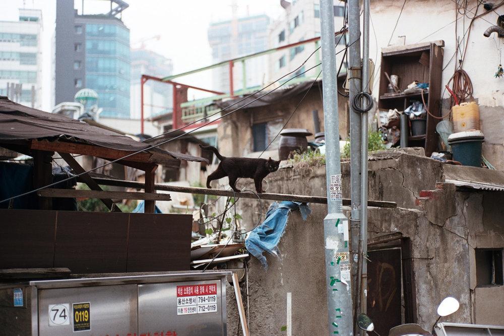 "DAVIS LAM ""I Was Lost But I've Been Found - Yongsan-gu (2016)"" Black Cat - davislam.com"
