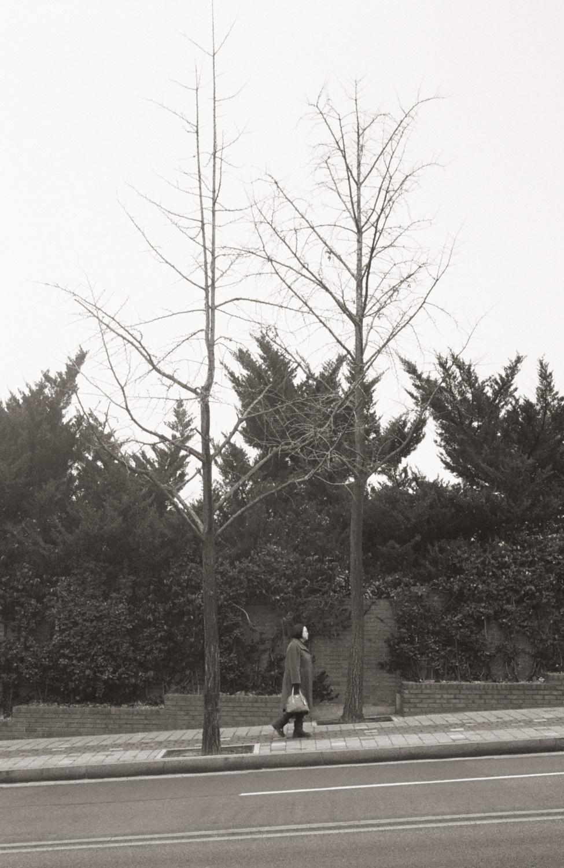 davislam.com_seoul2017--9.jpg
