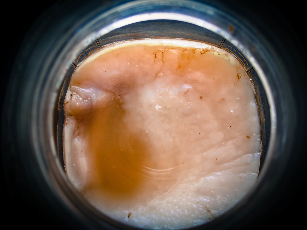 """A SCOBY culture is also commonly referred to as """"The Mother"""" or """"Mushroom""""."""