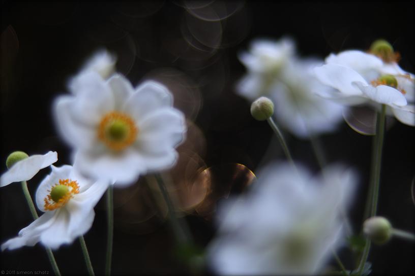 35mm_digital_flowers_kiss.jpg