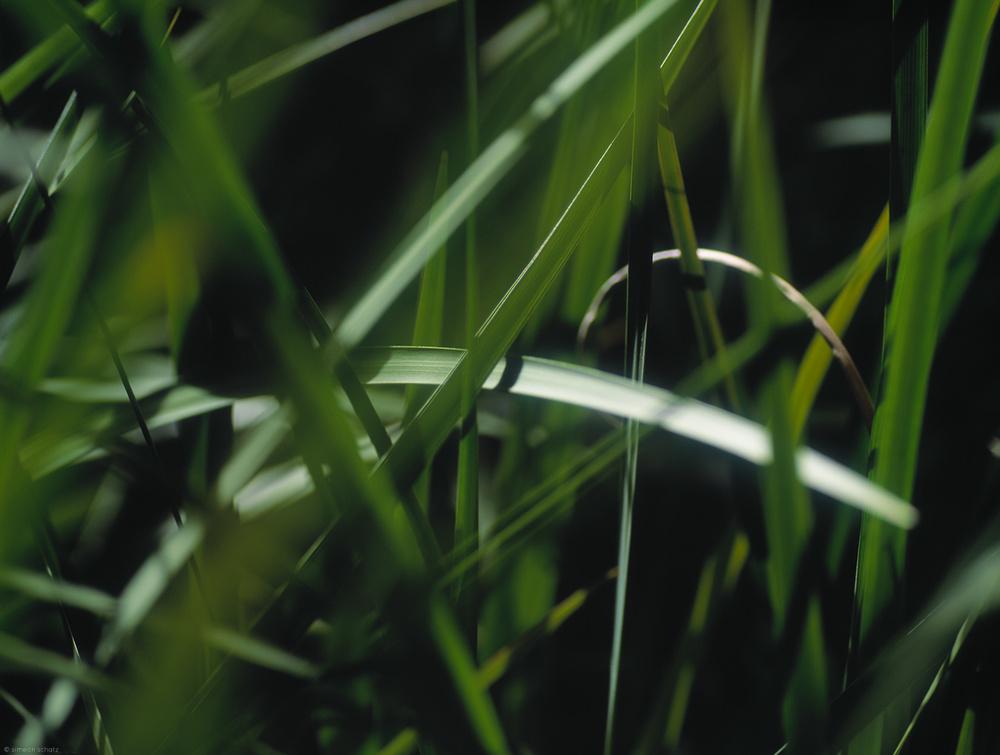 zengrass.jpg