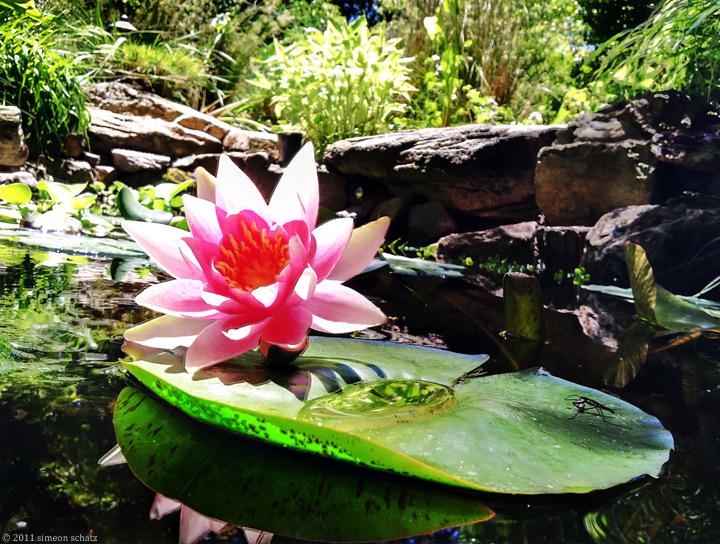 iphone_lotus1.jpg