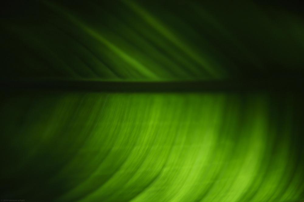35mm_digital_nightleaf.jpg