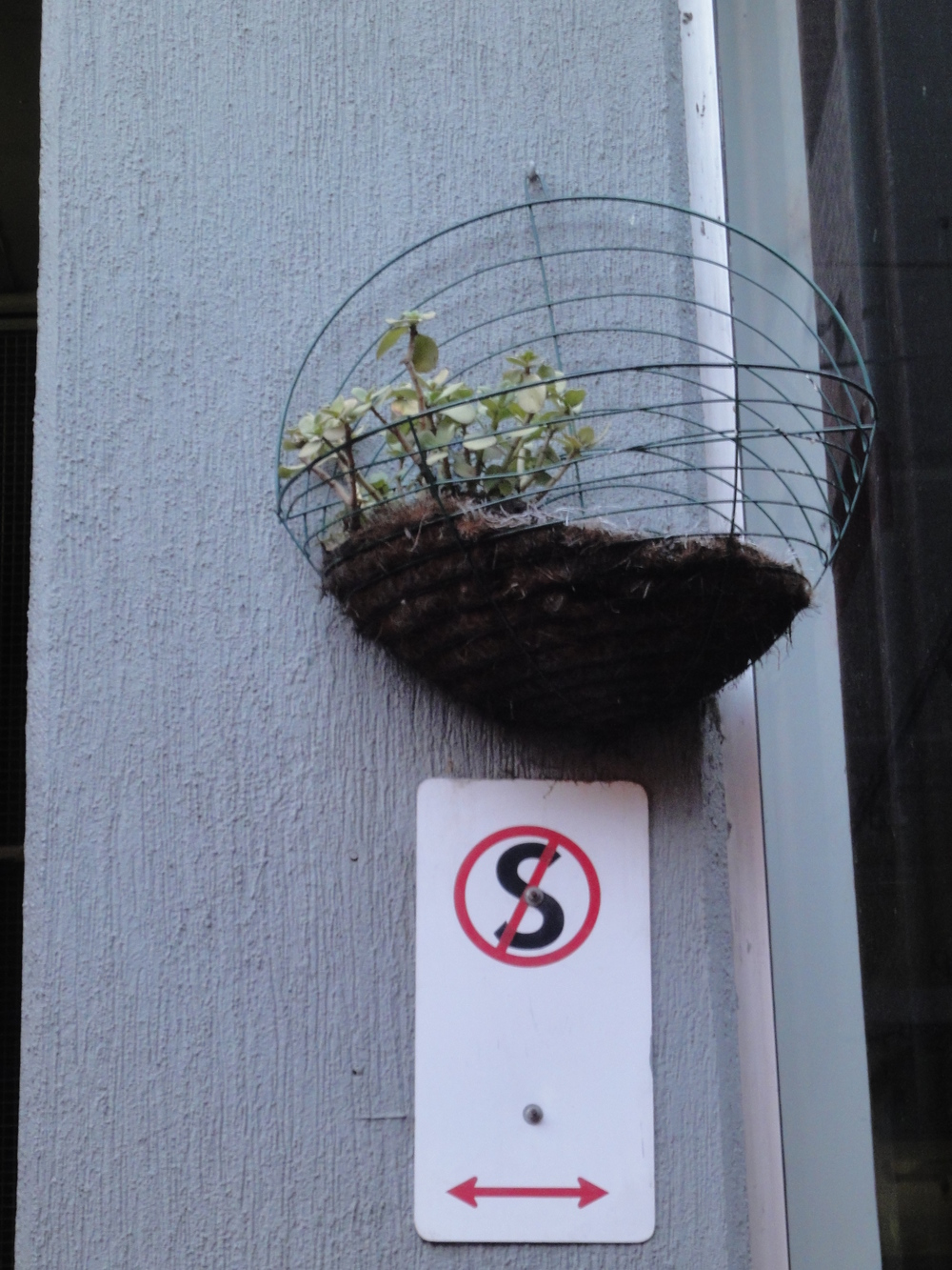 The irony of a standing plant basket in a 'no standing' zone on Hardware Lane in Melbourne, Australia.