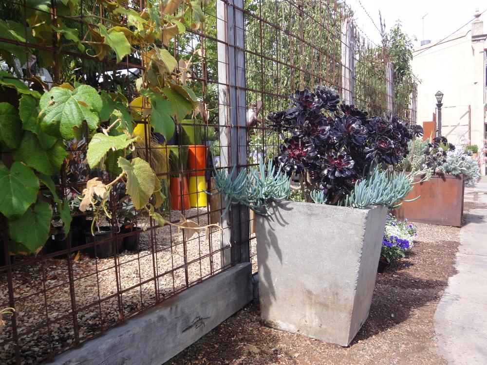 Daylesford browsing at The Secret Garden 1.JPG