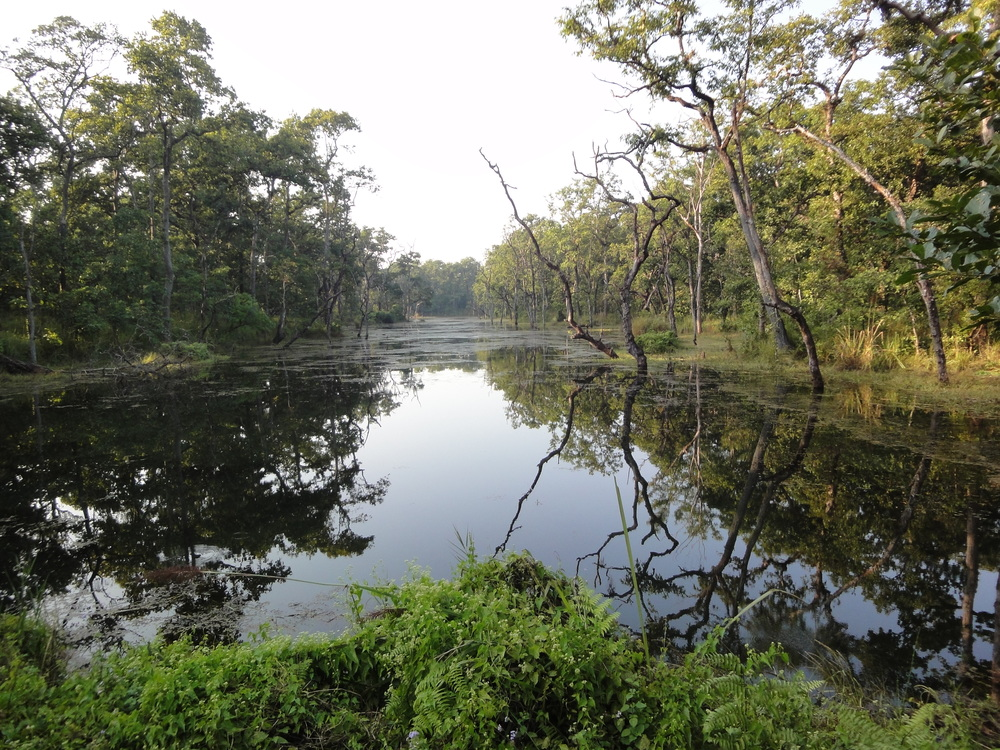 Chitwan National Park lagoon.JPG