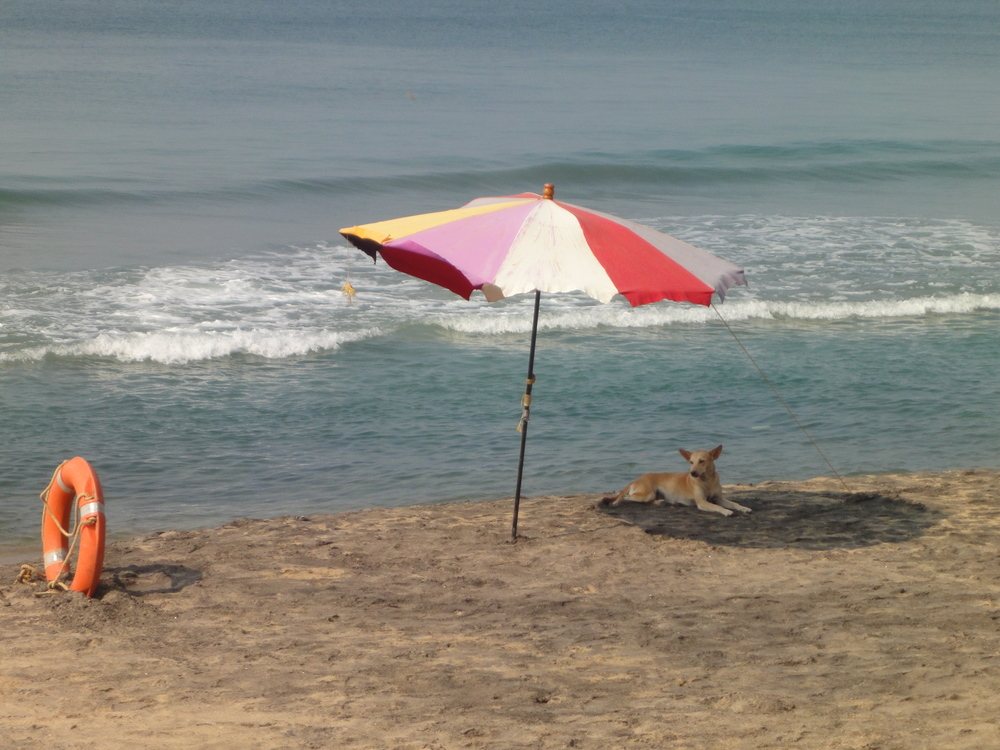 Varkala beach prayer umbrellas