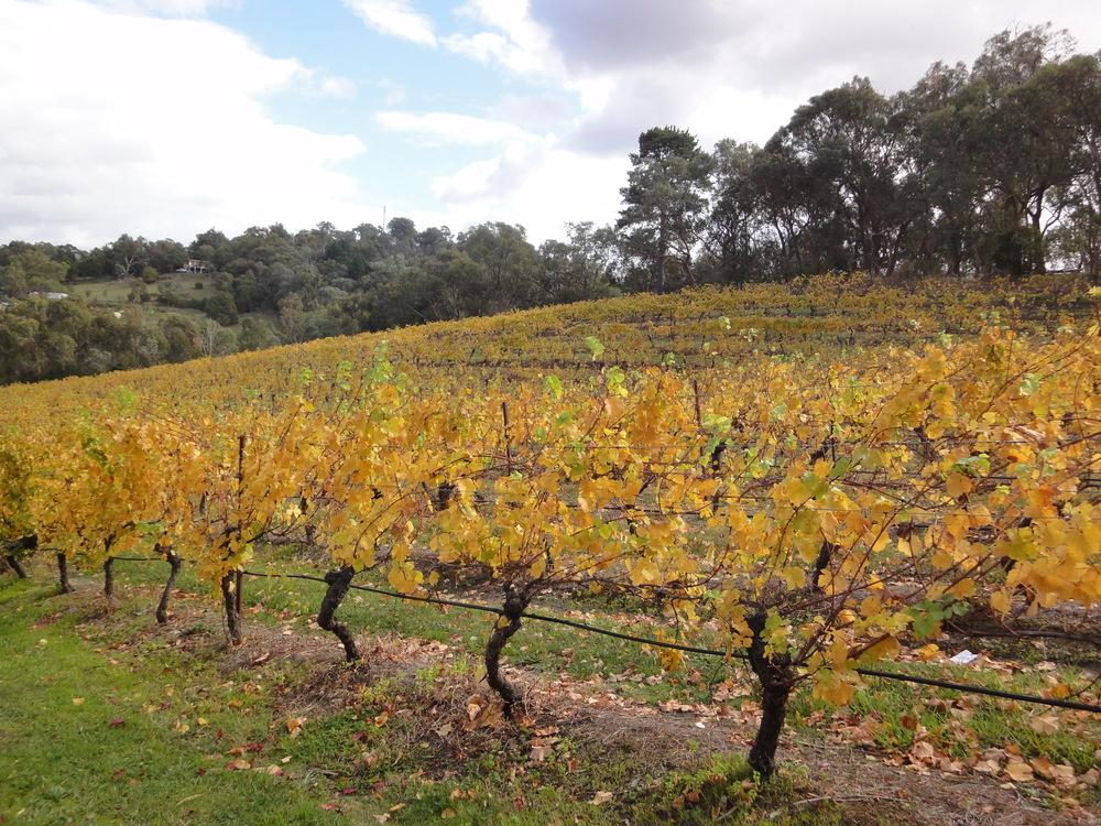 Kellybrook Winery vineyard