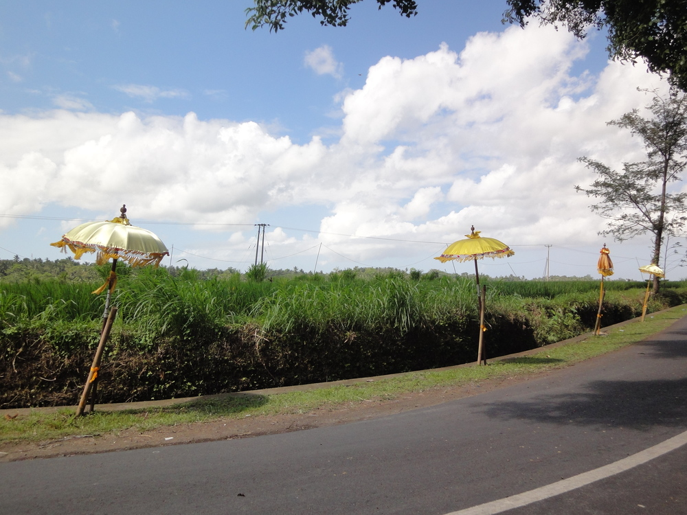 Festival umbrellas line the roadside in the spirit of Bali's Galungan festival.