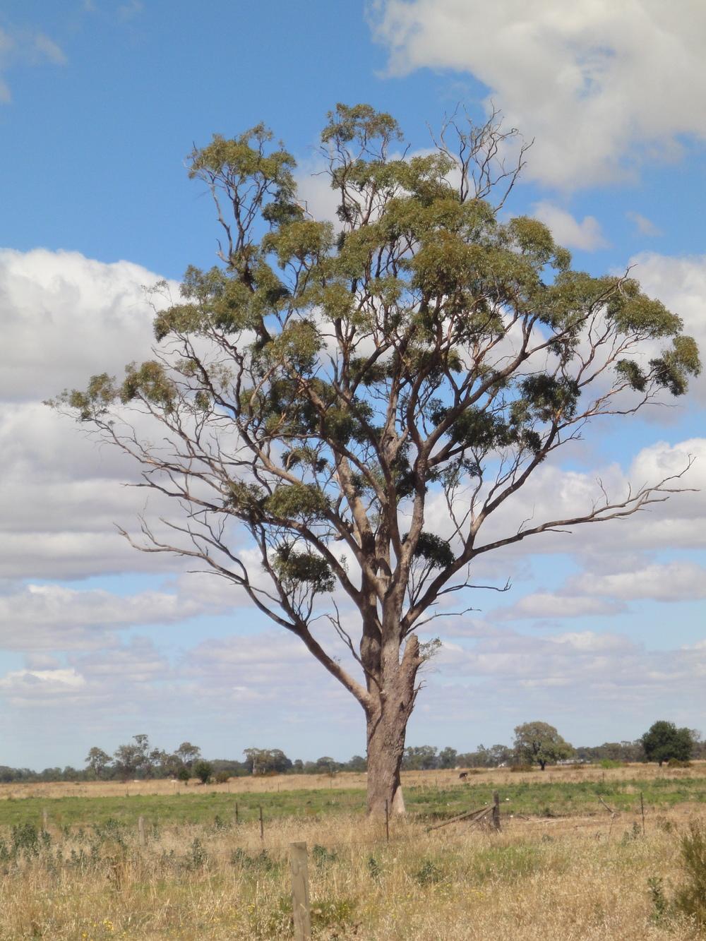 Australia Day Shepparton