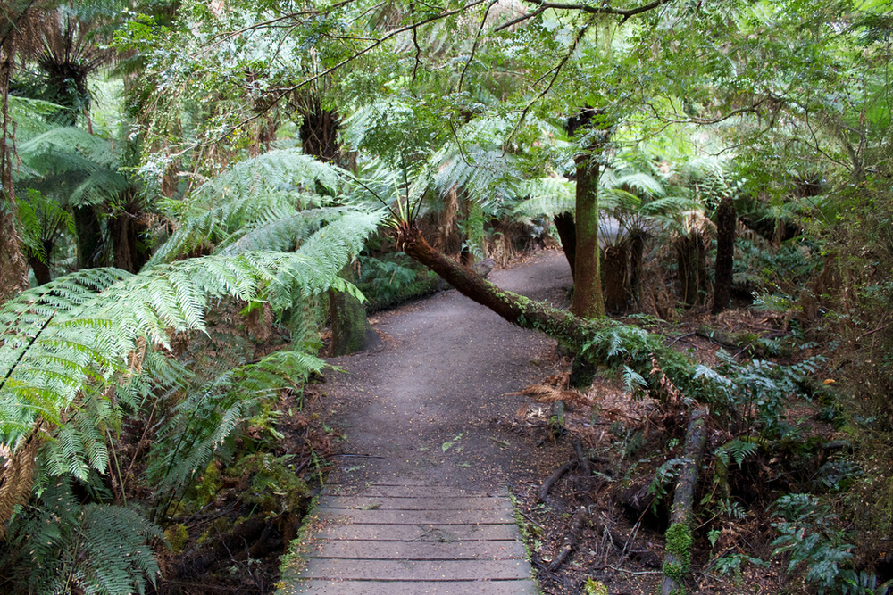 Find a lush path in The Otways. Photo credit: Photo Pin