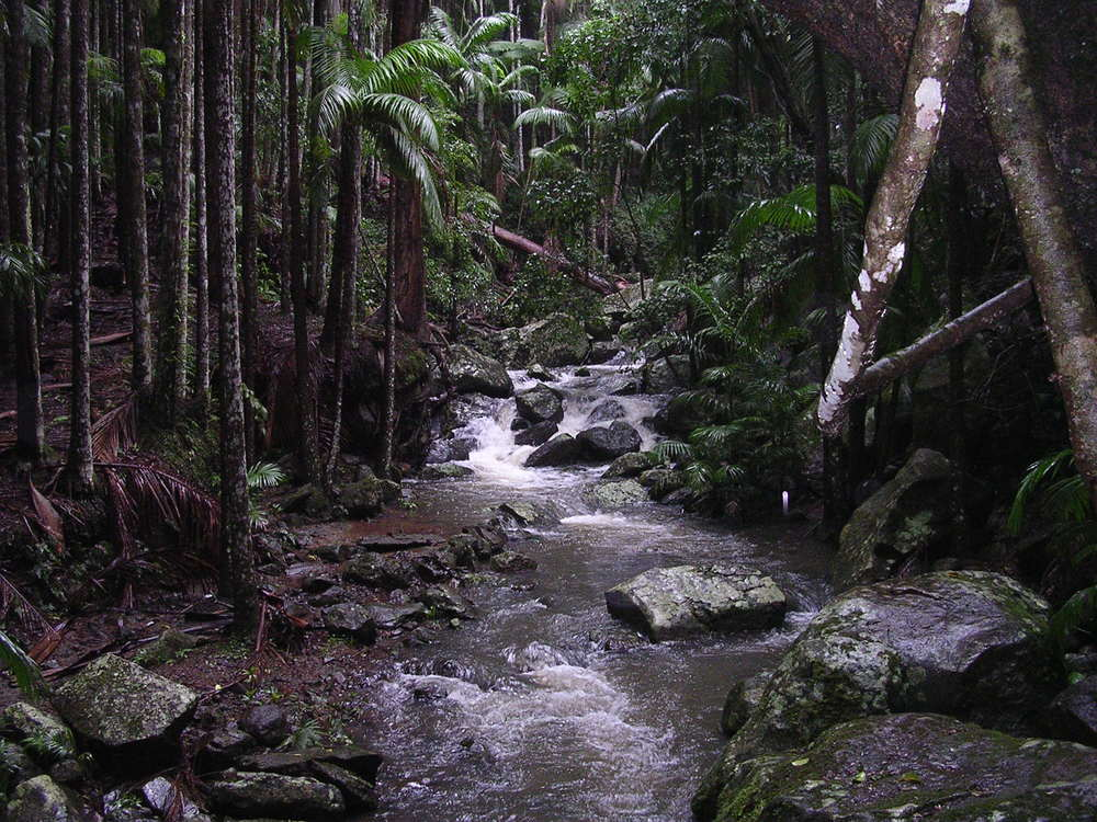 Tamborine Rainforest Skywalk Gold Coast Queensland