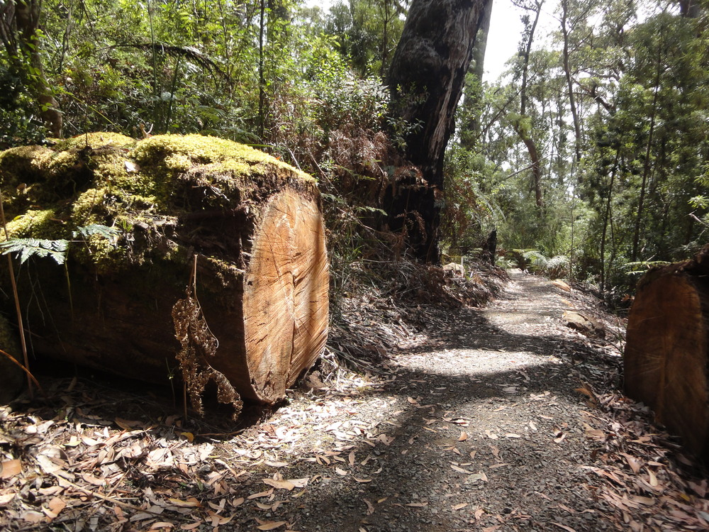 Three Capes Tasmania travel hiking