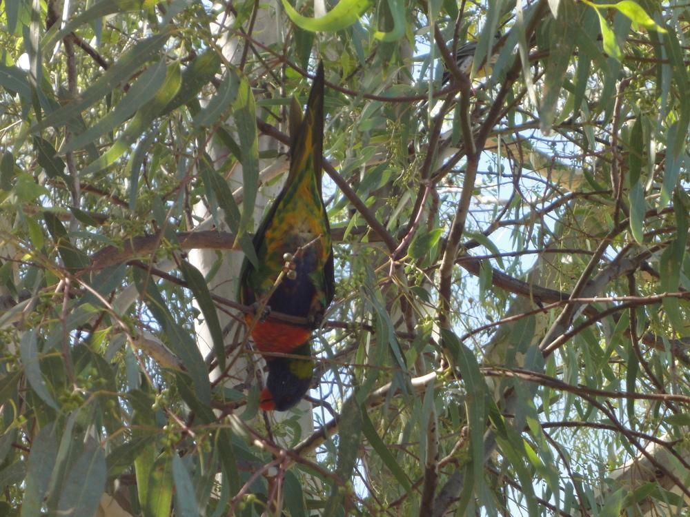 Tamworth travel country music birds nature australia