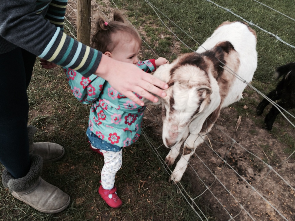 Petting the goats at Over Farm