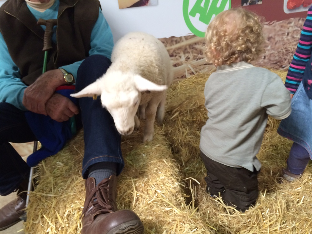Being cautious with the lamb