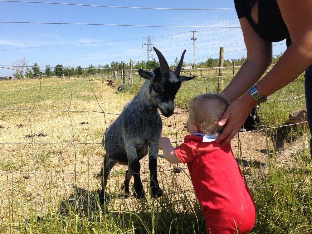 Over Farm Trip