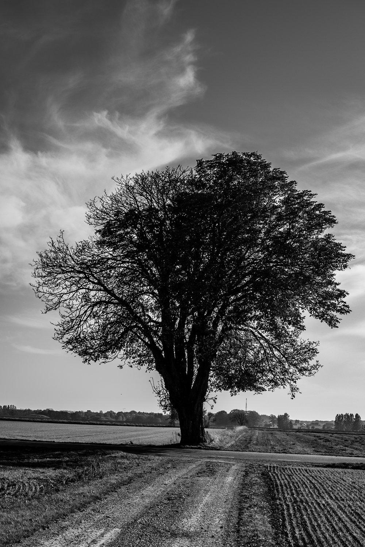 Træet der bare skulle fotograferes.