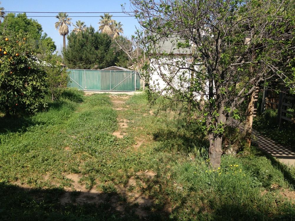 Before - overgrown yard