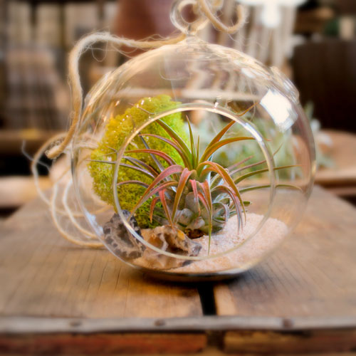 ALAPASH HOME & TERRARIUMS