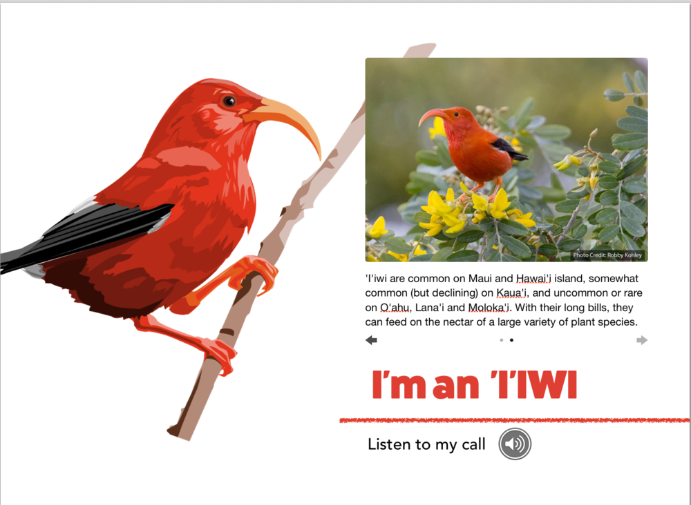 Who Am I? - A Kaua'i Forest Bird Guessing Game