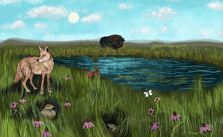 Ecosystem Interactive - Prairie illustration