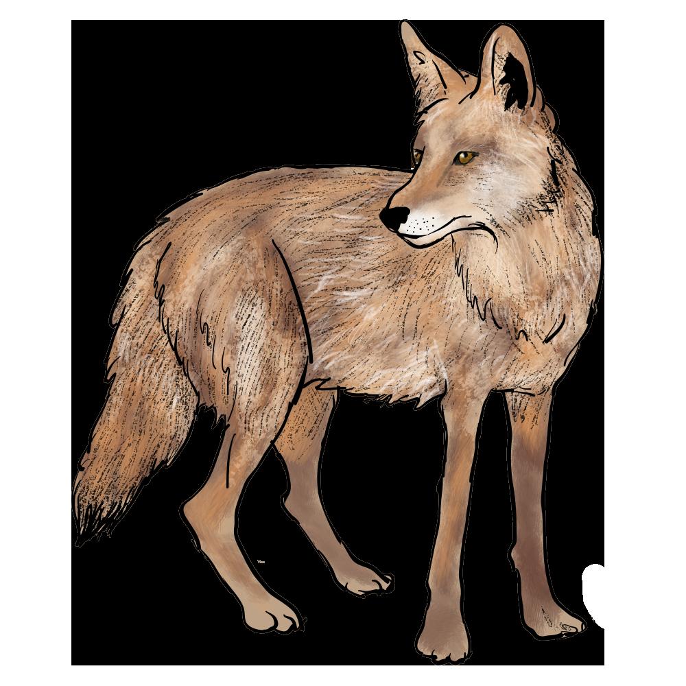 Ecosystem Interactive - Coyote