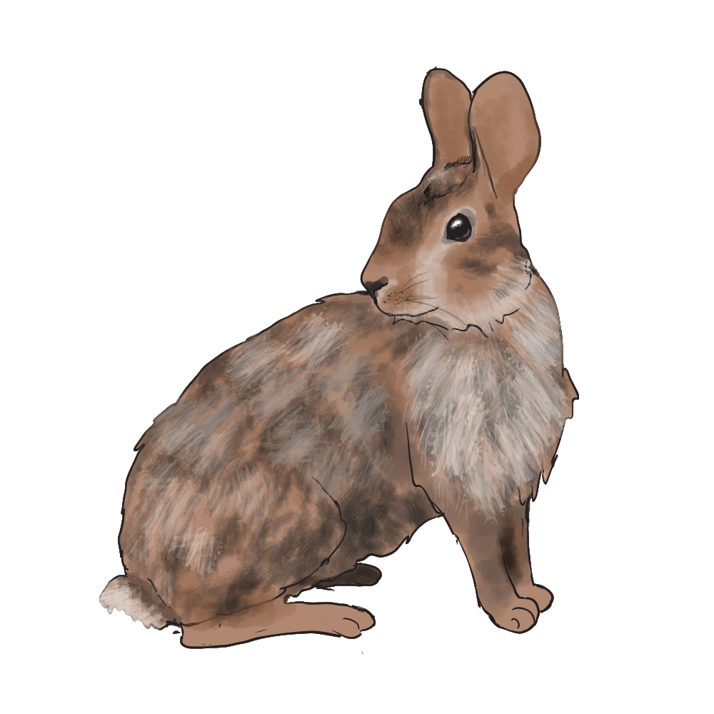 CottonTail.png