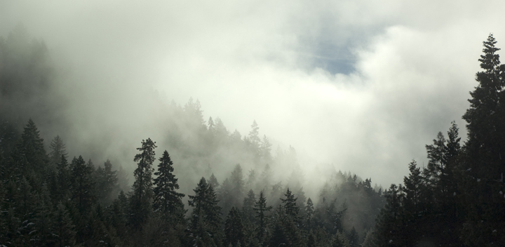 trees_web