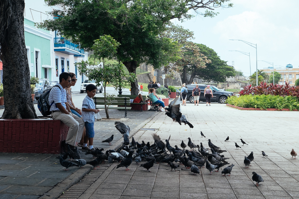 Pidgeon Family 2 San Juan