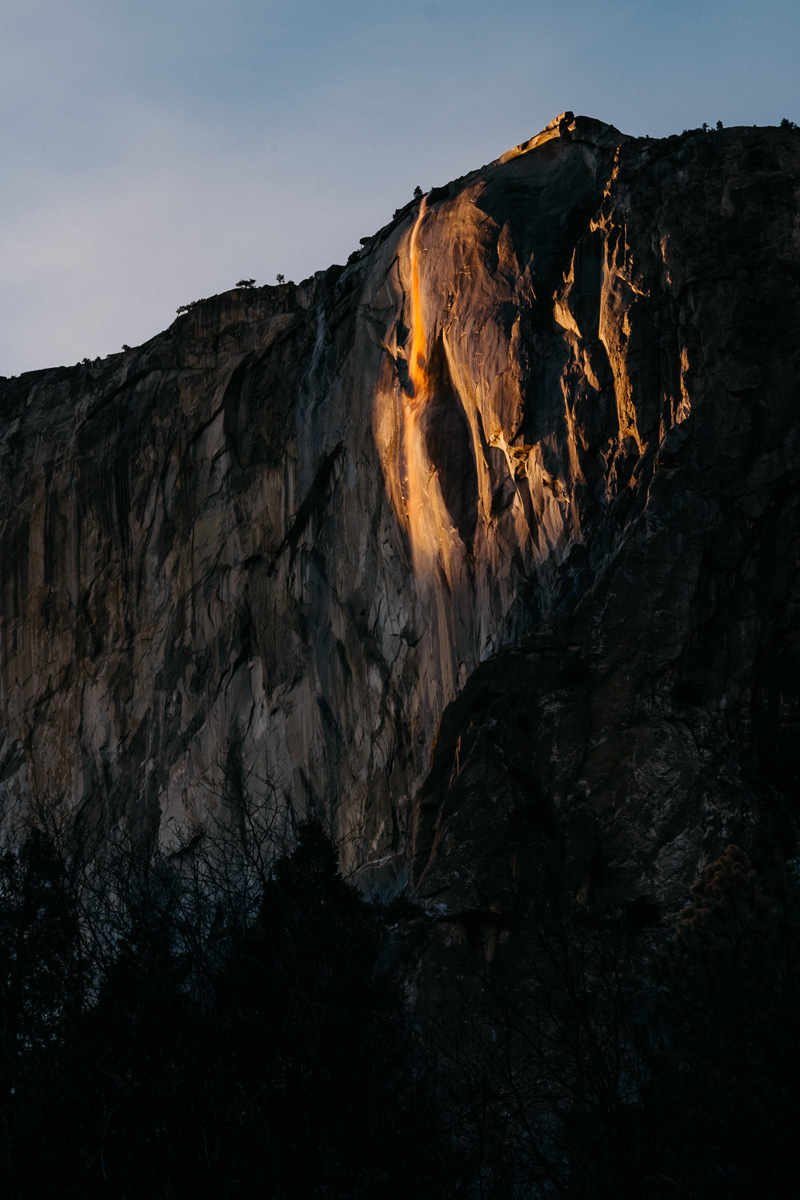 Yosemite Horsetail