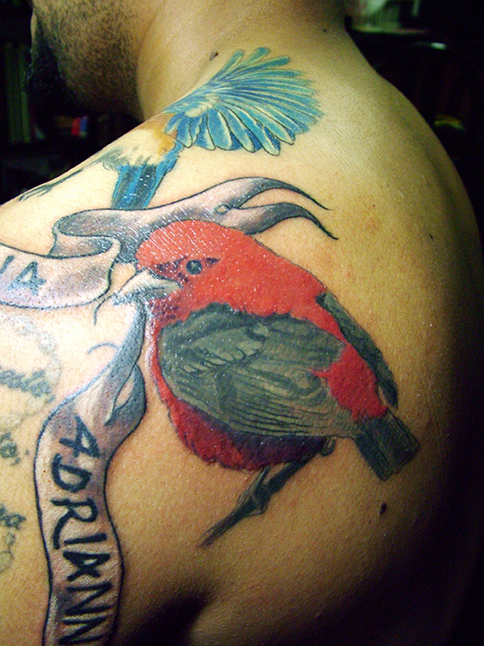 birdsred.JPG