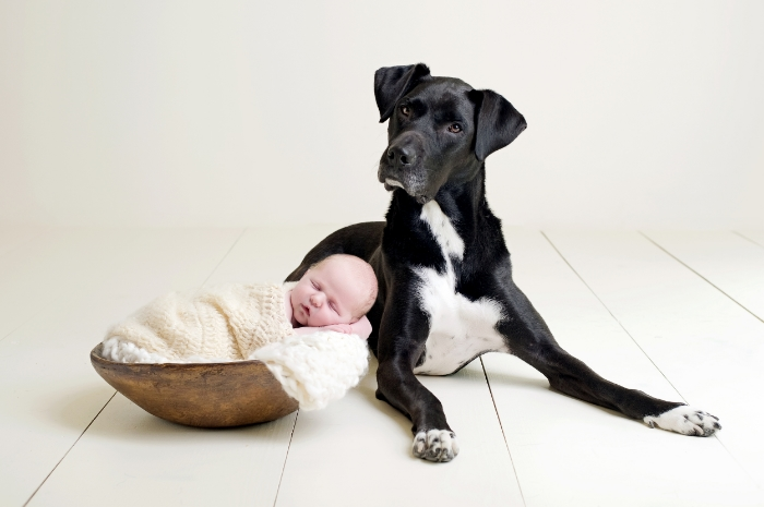 newborn portrait with family dog