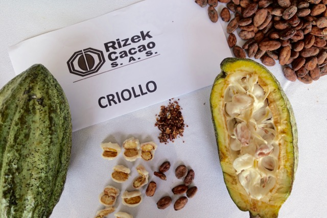 Succulent Chocolates_Cacao Plantation - 45.jpg